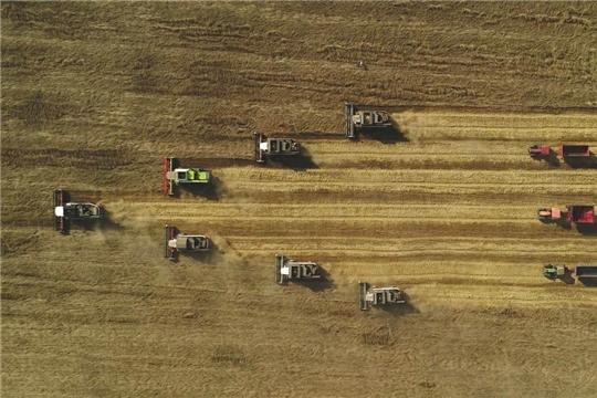 На 14 сентября в республике намолочено 905,5 тыс. тонн зерна