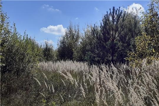 Проверка целевого использования земель сельскохозяйственного назначения в Чебоксарском районе