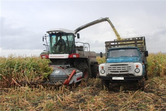 В СХПК «Комбайн» Яльчикского района приступили к уборке кукурузы