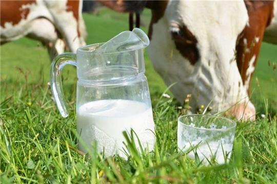 Производство молока в Чувашии выросло почти на 4% за восемь месяцев 2020 года