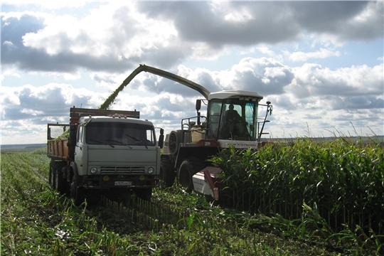 Уборка кукурузы на силос в Ибресинском районе