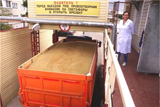 АО «Чувашхлебопродукт» в 4 раза нарастил закупки продовольственной ржи