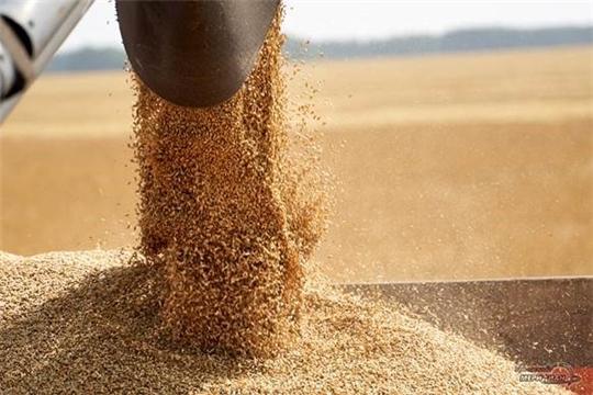 Валовой сбор зерна в республике более чем на 30%  превышает показатель прошлого года
