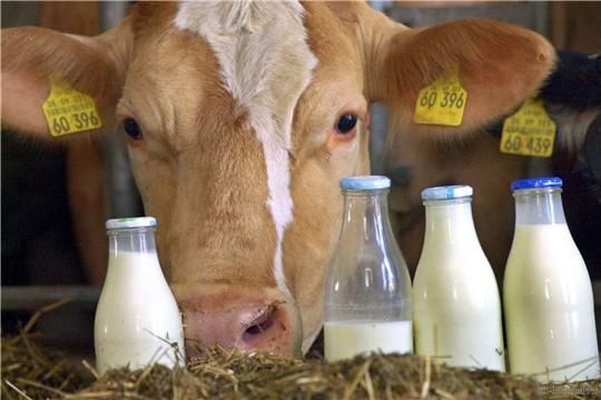 Чувашские аграрии нарастили  объемов производства молока на 3,7 %