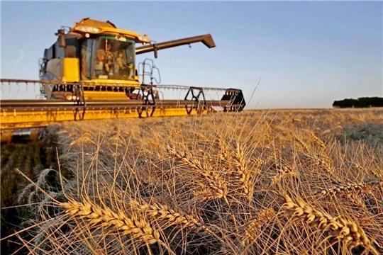 Урожайность текущего года рекордная за всю историю АПК Чувашии – 32,2 ц/га