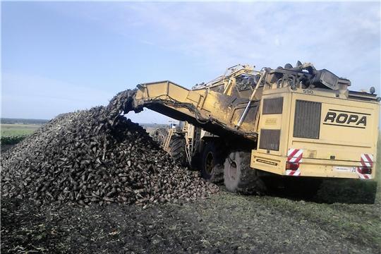 В хозяйствах Шемуршинского района началась уборка сахарной свеклы