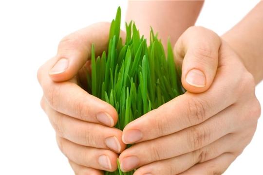 Агростраховщики рассчитывают получить от 35% до 45% годовой премии от защиты урожая озимых