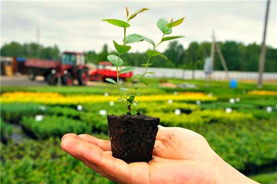 Минсельхоз РФ может рассмотреть возможность введения квоты на импорт посадочного материала