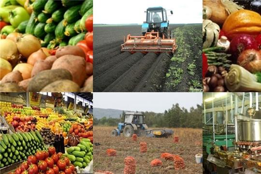 Урожай основных культур 2020 г. позволит обеспечить внутренние потребности РФ