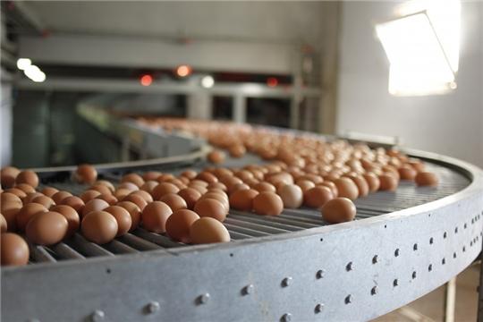 Чувашия в четверке лидеров роста производства куриных яиц в ПФО за 9 месяцев