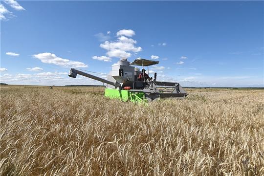 Сбор зерна в Чувашии приблизился к рекордным показателям