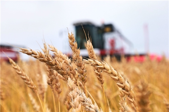 Возможность использования грантов для фермеров на создание и развитие агробизнеса продлена на год