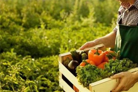Россельхозбанк и «Агро-Инновации» будут вместе поддерживать фермеров Чувашской Республики