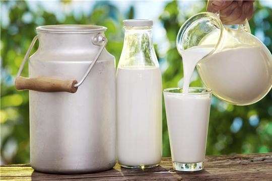 Объём реализации молока в сельхозорганизациях вырос на 5,9%