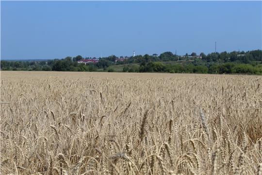 Земледельцы Порецкого района достойно завершают сельскохозяйственный год