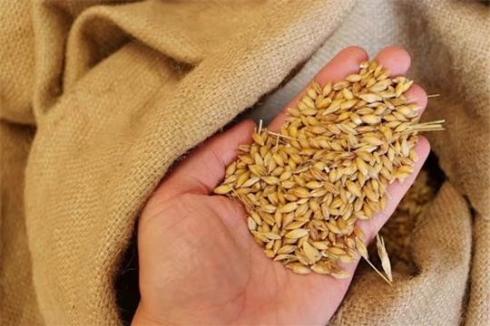 На подработке и очистке семян яровых зерновых и зернобобовых культур в республике работает 151 звено.