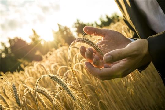 В России утвердили план реализации стратегии развития зернового комплекса