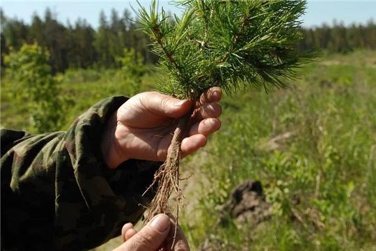 БУ «Канашское лесничество» Минприроды Чувашии для лесовосстановления передано имущество