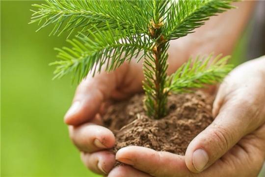 Канашскому лесничеству для лесовосстановления передано государственное имущество