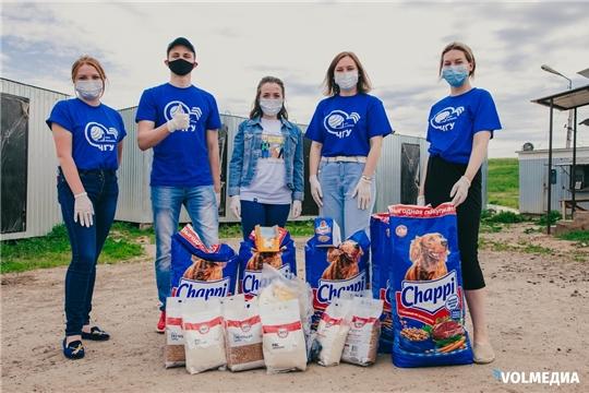 Волонтеры ЧГУ им. И.Н. Ульянова проводят благотворительную акцию «Лапа дружбы»