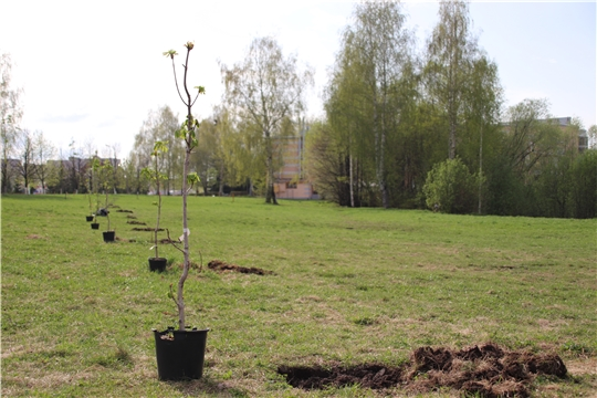 Новочебоксарск присоединился к Всероссийской акции «Сад памяти»