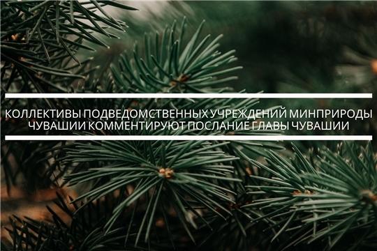 Комментарий  коллектива БУ «Шемуршинское лесничество»  к посланию Главы  Чувашии