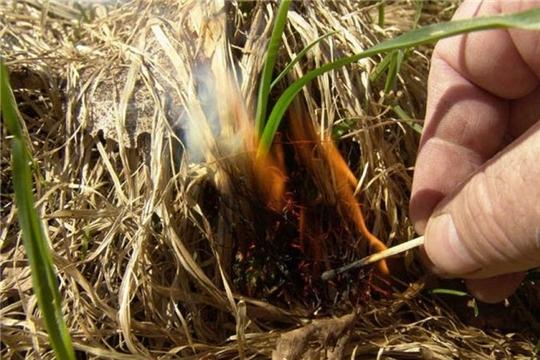 Травяной пал – это настоящее стихийное бедствие