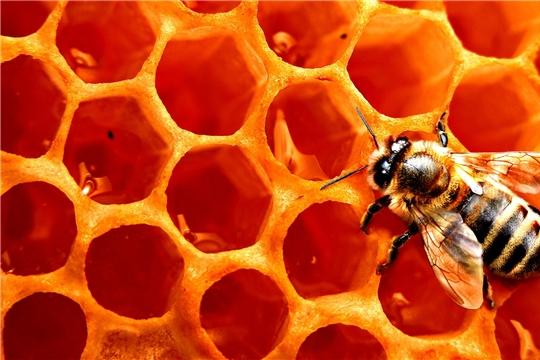 На заметку пчеловодам и сельхозтоваропроизводителям.