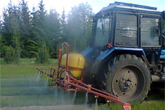 В Шумерлинском лесничестве защищают сеянцы сосны от вредителей и болезней