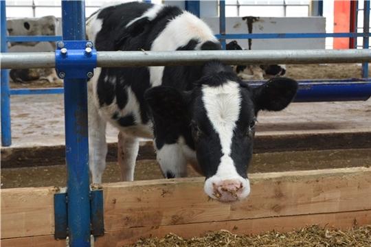 Выплаты на содержание дойных коров должны начаться в конце июня