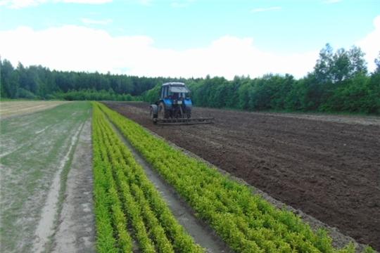В Шумерлинском лесничестве подготовили 2 га земли для выращивания сеянцев