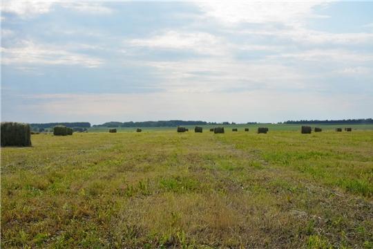 В хозяйствах района идут работы по заготовке кормов.