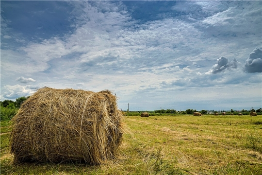 Шумерлинский район попал в  шестерку районов, где выполнены плановые показатели по заготовке сена