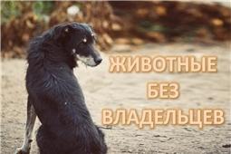 Животные без владельцев