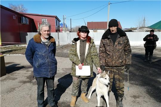 Состоялась 3-я Урмарская районная выводка охотничьих собак
