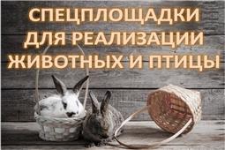 Специализированные площадки Чувашской Республики, предназначенные для реализации домашних животных и птицы