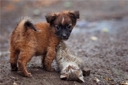 В Правительство Российской Федерации направлены предложения по созданию приютов для животных без владельцев в Чувашской Республике