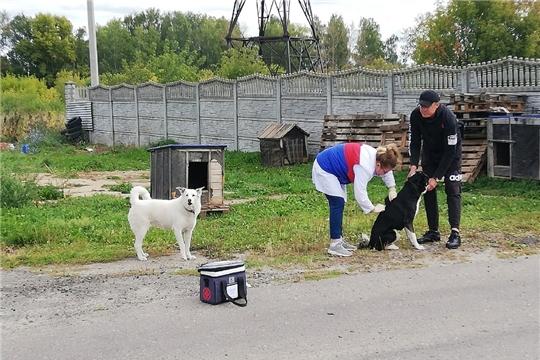 Волонтеры совместно с ветеринарами начали акцию по стерилизации бездомных собак