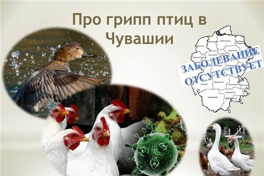 В Чувашии грипп птиц отсутствует