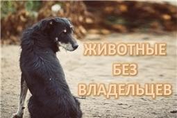 Животные без владельца