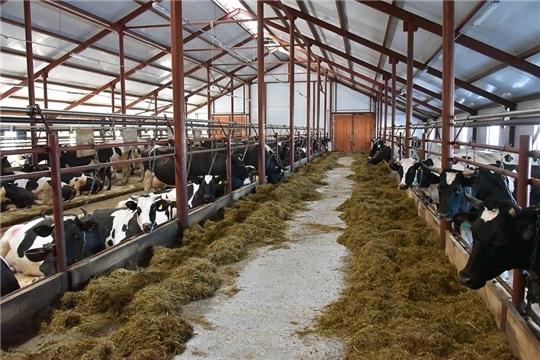 В Чувашии совершенствуется порядок возмещения затрат на строительство молочных ферм