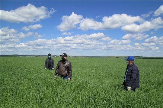 В хозяйствах Яльчикском района начались комиссионные смотры качества проведенных весенних полевых работ «Весна-2020»