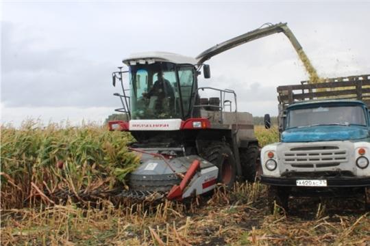 В СХПК «Комбайн» приступили к уборке кукурузы
