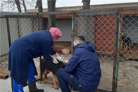 В Янтиковском районе началась плановая вакцинация против бешенства