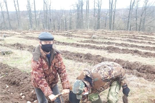 В Опытном лесничестве заложили лесные культуры