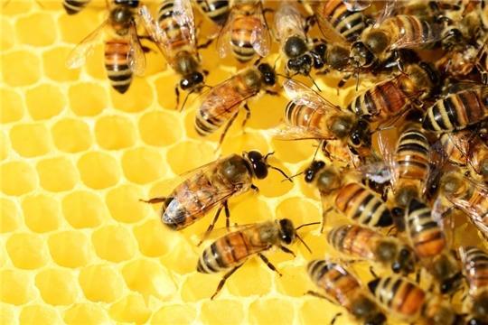 Информация для владельцев пасек о необходимости исключения вылета пчёл при обработке сельскохозяйственных культур пестицидами