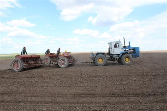 В Цивильском районе продолжается горячая пора весенне-полевых работ