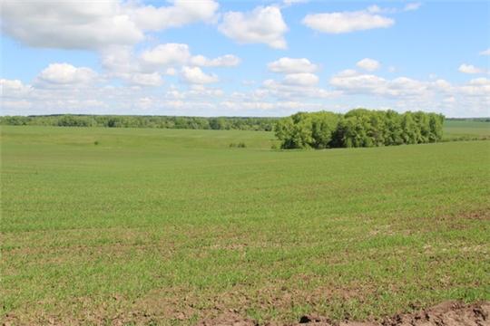 Сельхозпредприятия Цивильского района стремятся завершить сев в ближайшие дни