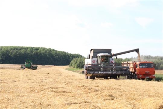 В Цивильском районе уборка зерновых культур набирает обороты