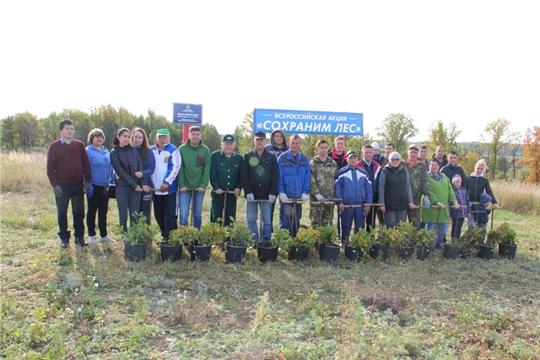 В Цивильском районе прошло мероприятие по посадке деревьев в рамках Всероссийской акции «Сохраним лес»